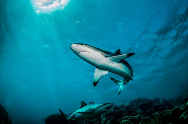 Shark Fishing: 5 Things to Keep in Mind