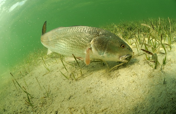 Six Species of Florida Fish to Find This Winter