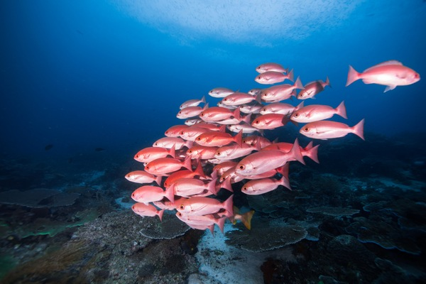 Daytona Beach Fishing Charters: Everything You Need to Know About Red Snapper Fishing